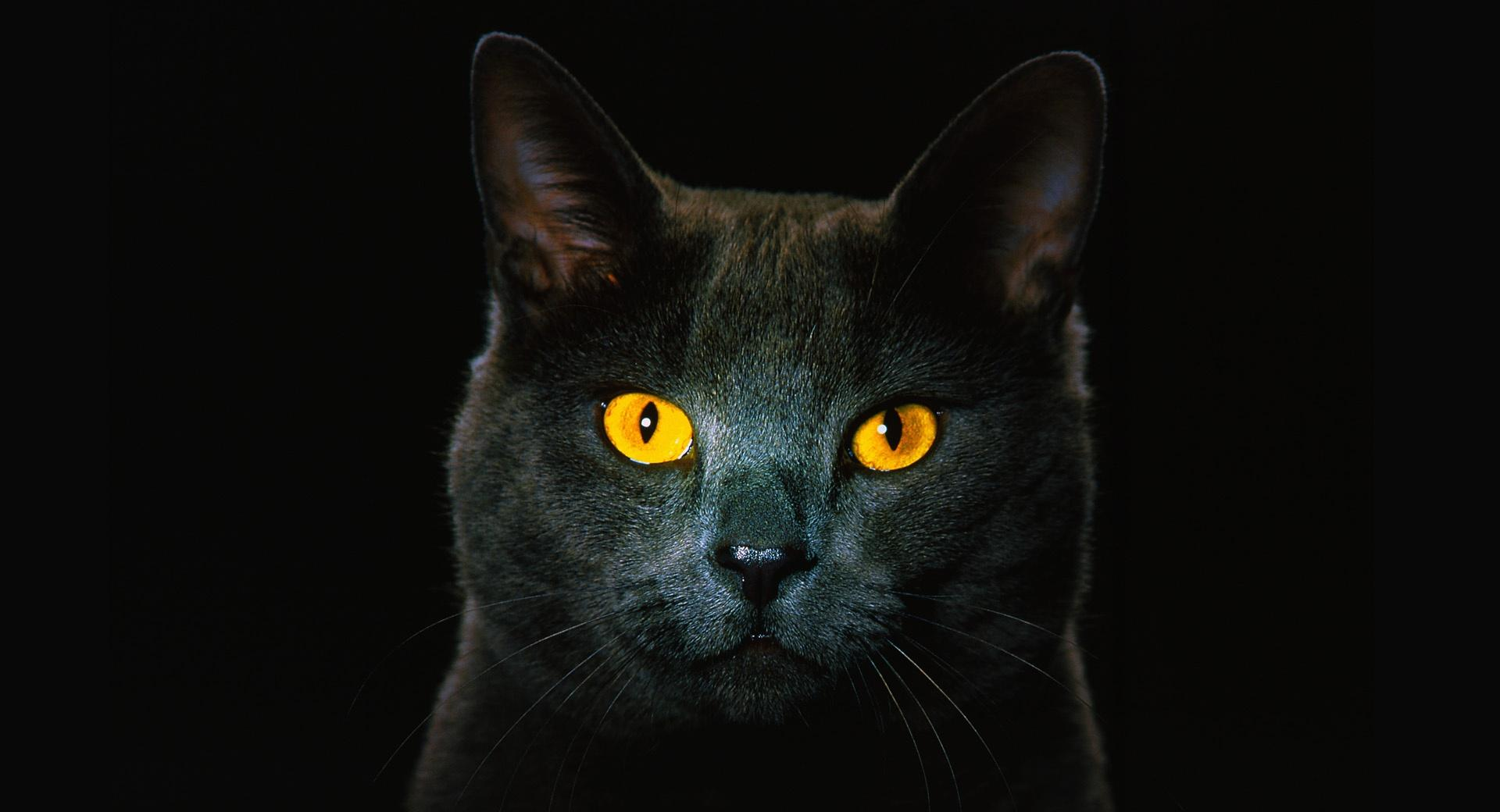 Golden Eyes wallpapers HD quality