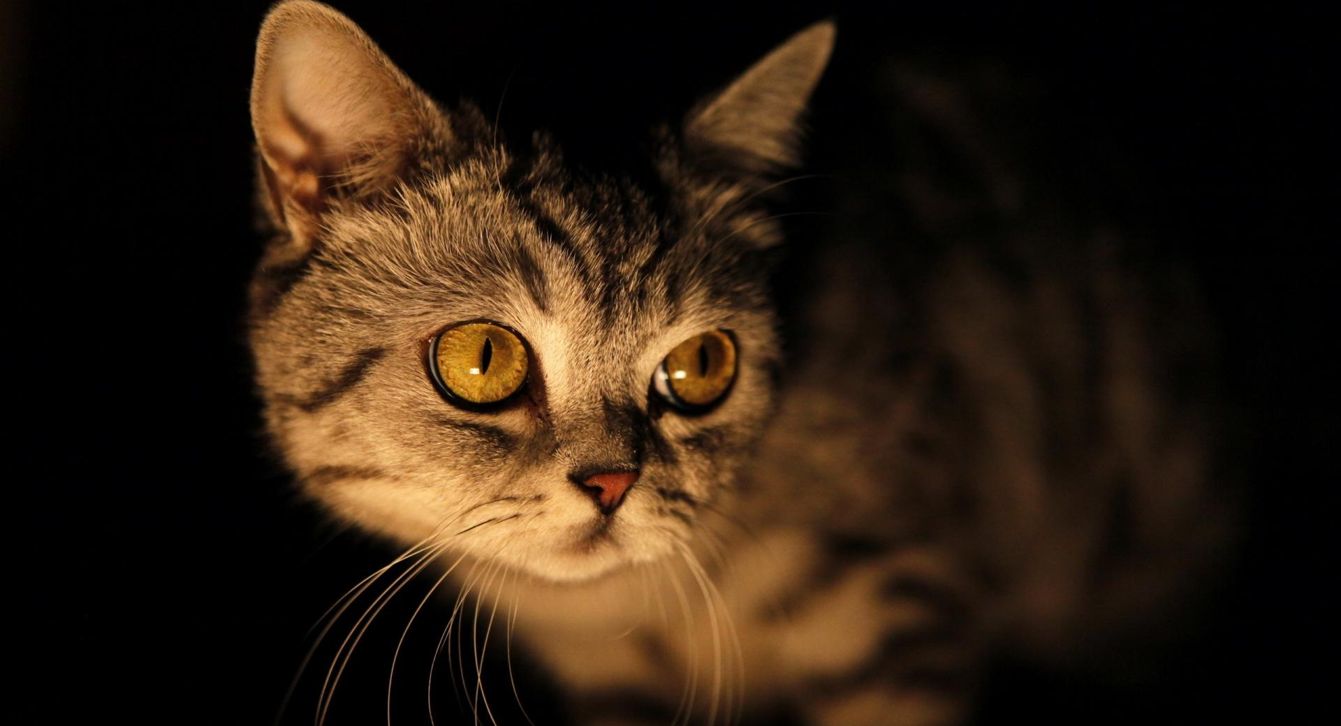 Mysterious Cat wallpapers HD quality