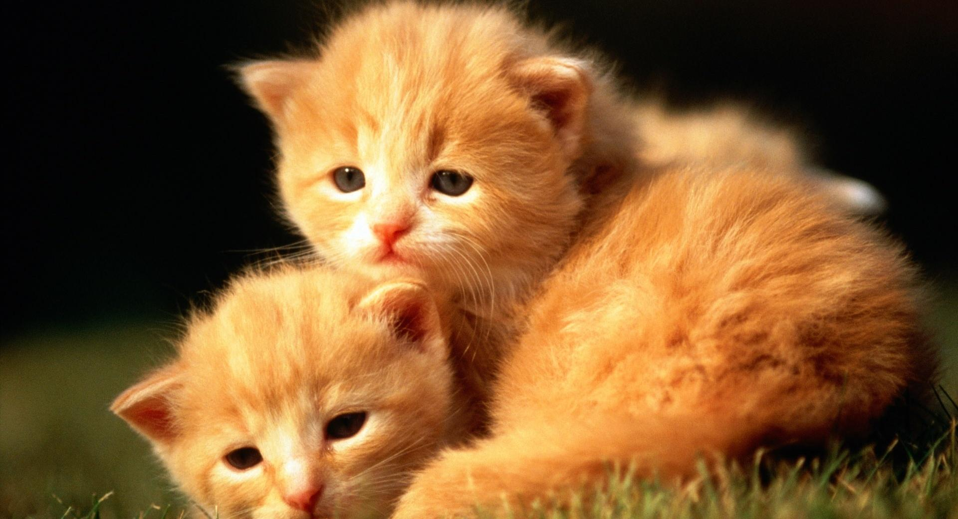 Two Baby Kittens wallpapers HD quality