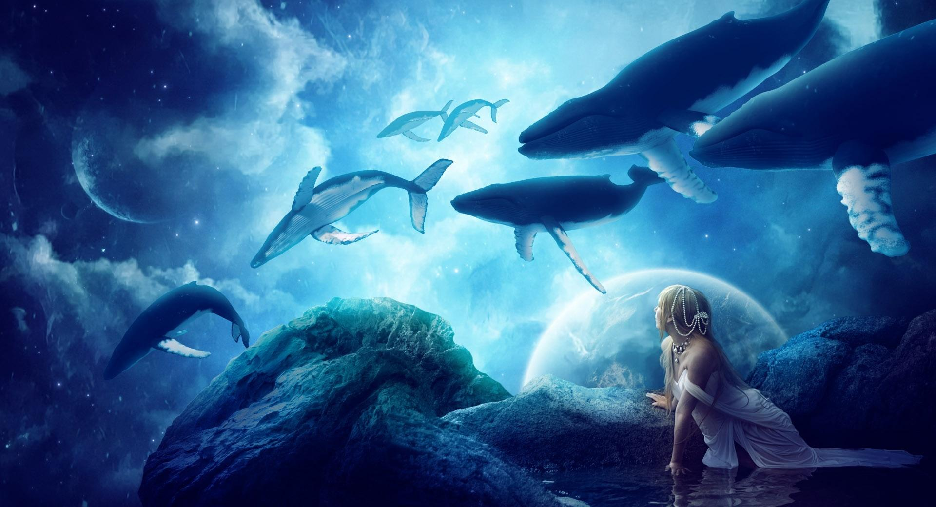 Whales Dream wallpapers HD quality