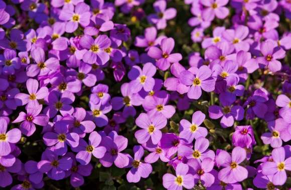 A Lot Of Purple Flowers