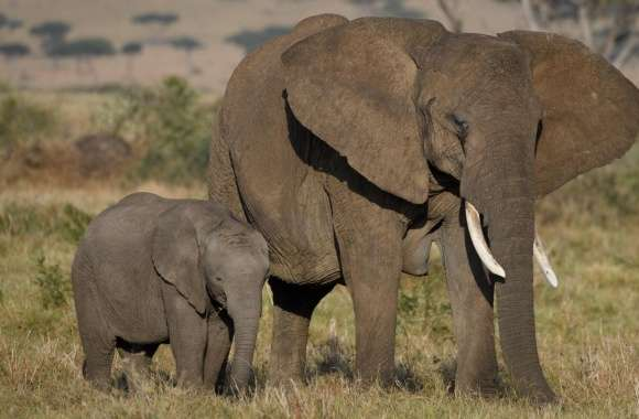 African Elephants Mother and Cute Baby