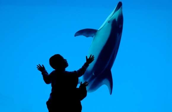 Children And A Dolphin