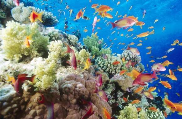 Coral Reef Southern Red Sea Near Safaga Egypt