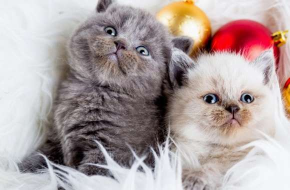 Kittens Balls wallpapers hd quality