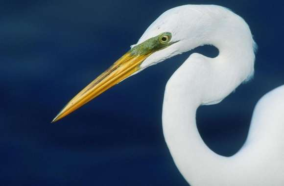 Perfect Form Egret