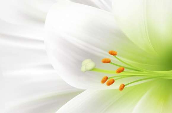 White Lily, Easter Flower wallpapers hd quality