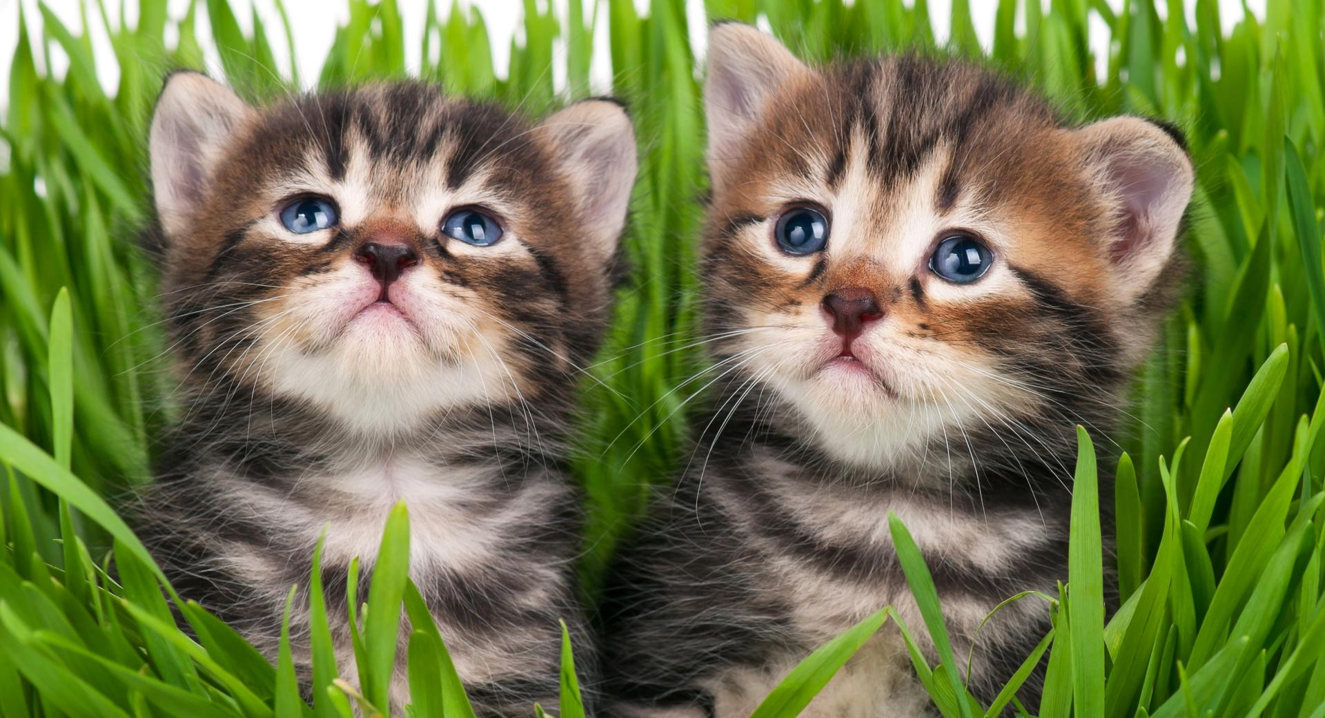 Baby Kittens wallpapers HD quality
