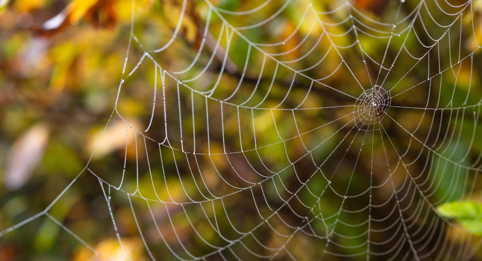 Delicate Spider Web wallpapers HD quality