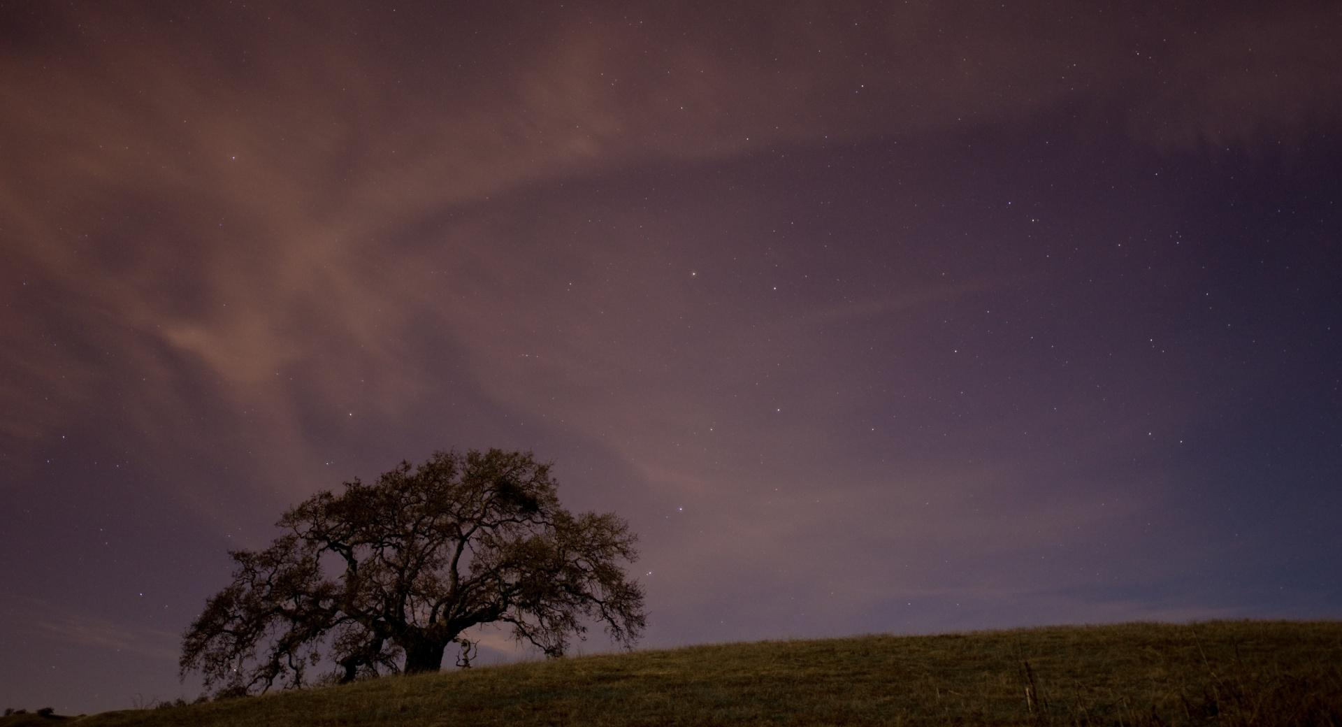 Live Oak At Twilight wallpapers HD quality