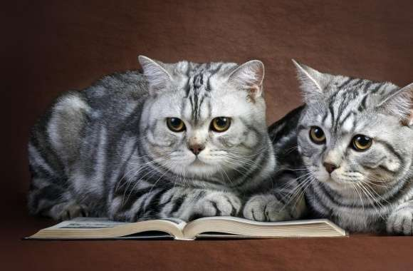 Cats On Book