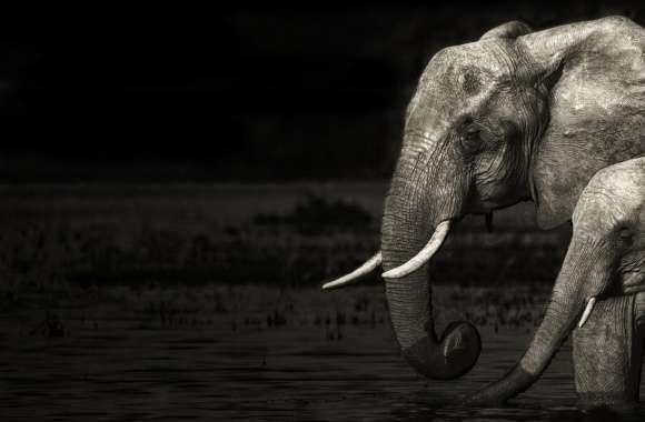 Elephants wallpapers hd quality