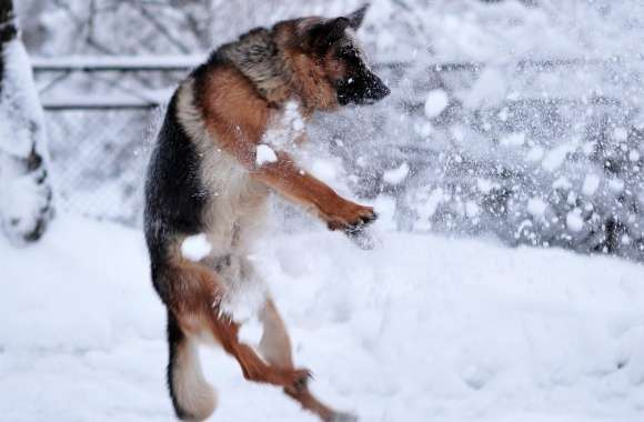 German Shepherd Plying In The Snow wallpapers hd quality