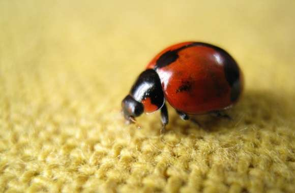 Ladybird wallpapers hd quality