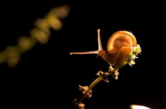 Snail On Branch wallpapers hd quality