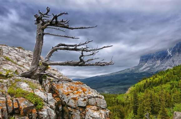 Tree On Rock In Glacier National Park wallpapers hd quality