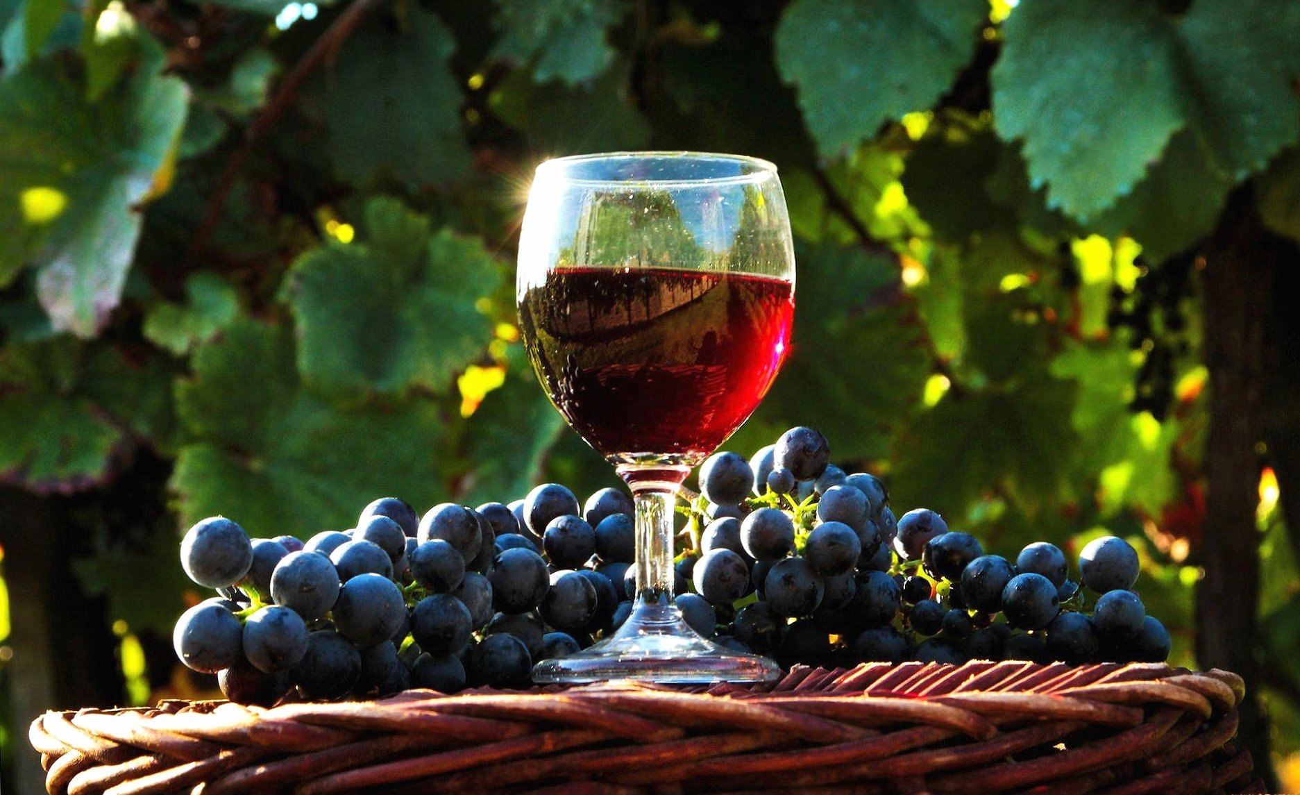 A glass of wine wallpapers HD quality