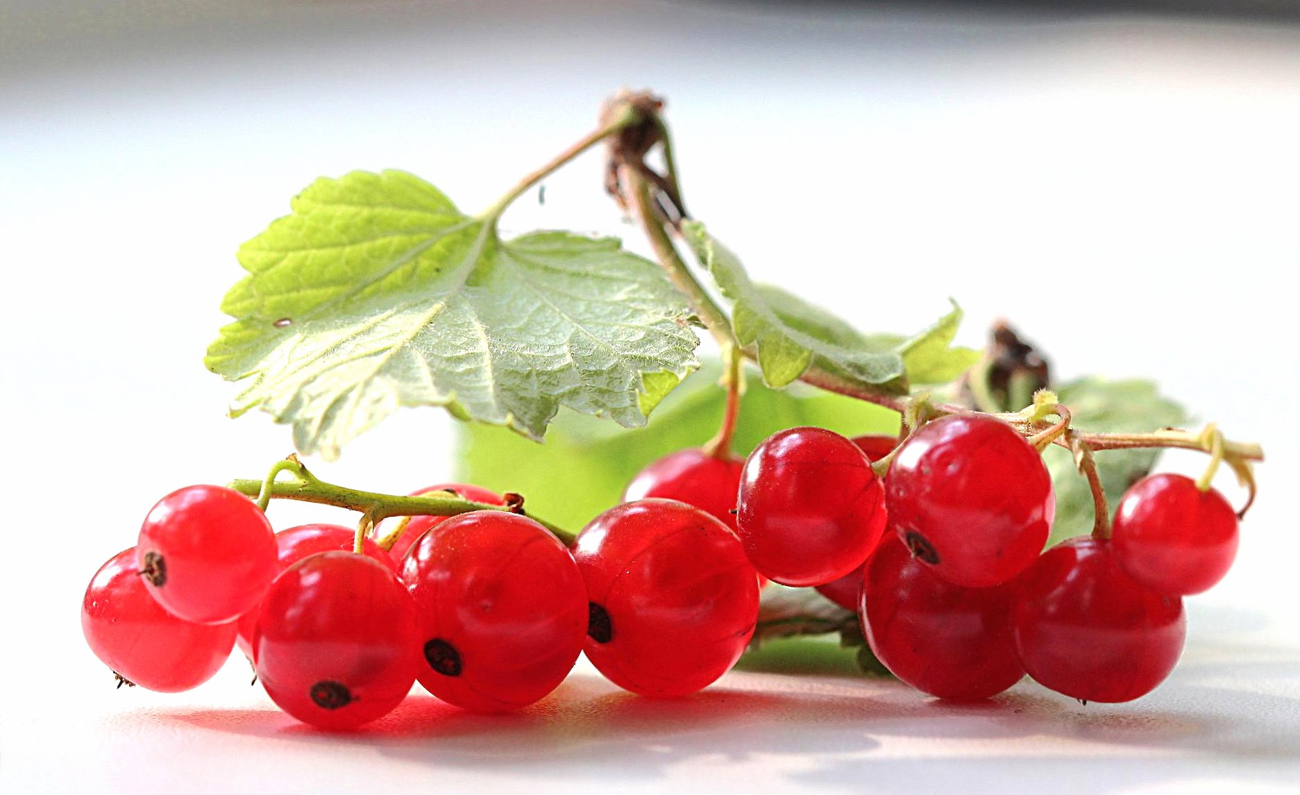 природа ягоды смородина nature berries currant без смс