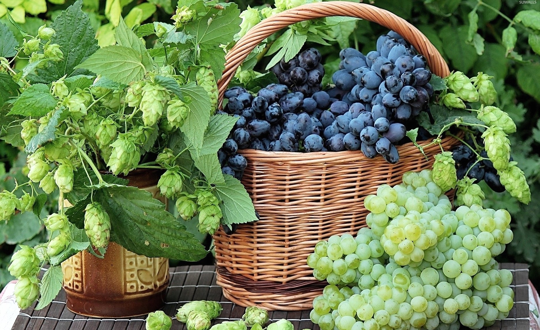 Black grapes in a straw basket wallpapers HD quality