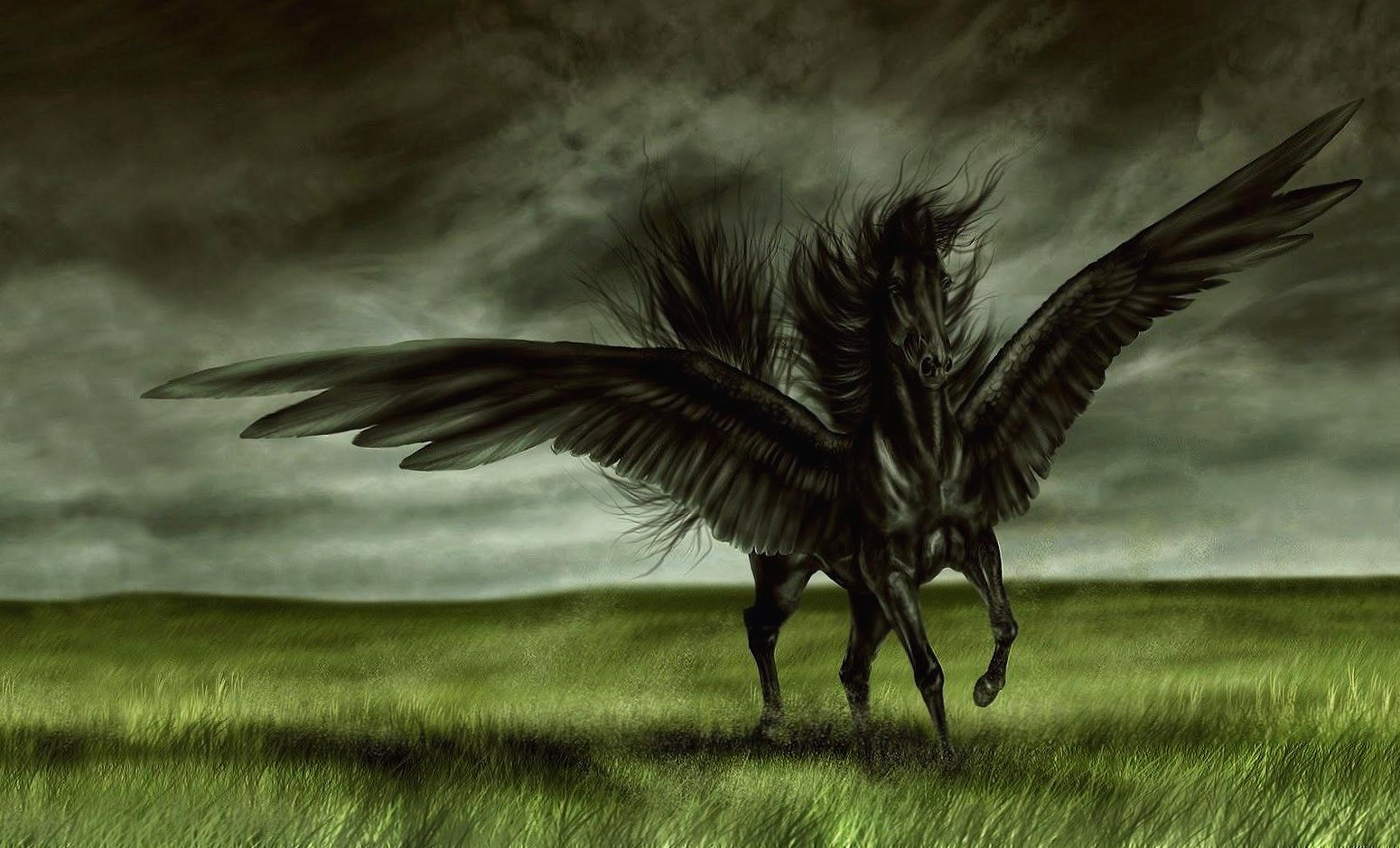 Black horse with wings digital wallpapers HD quality