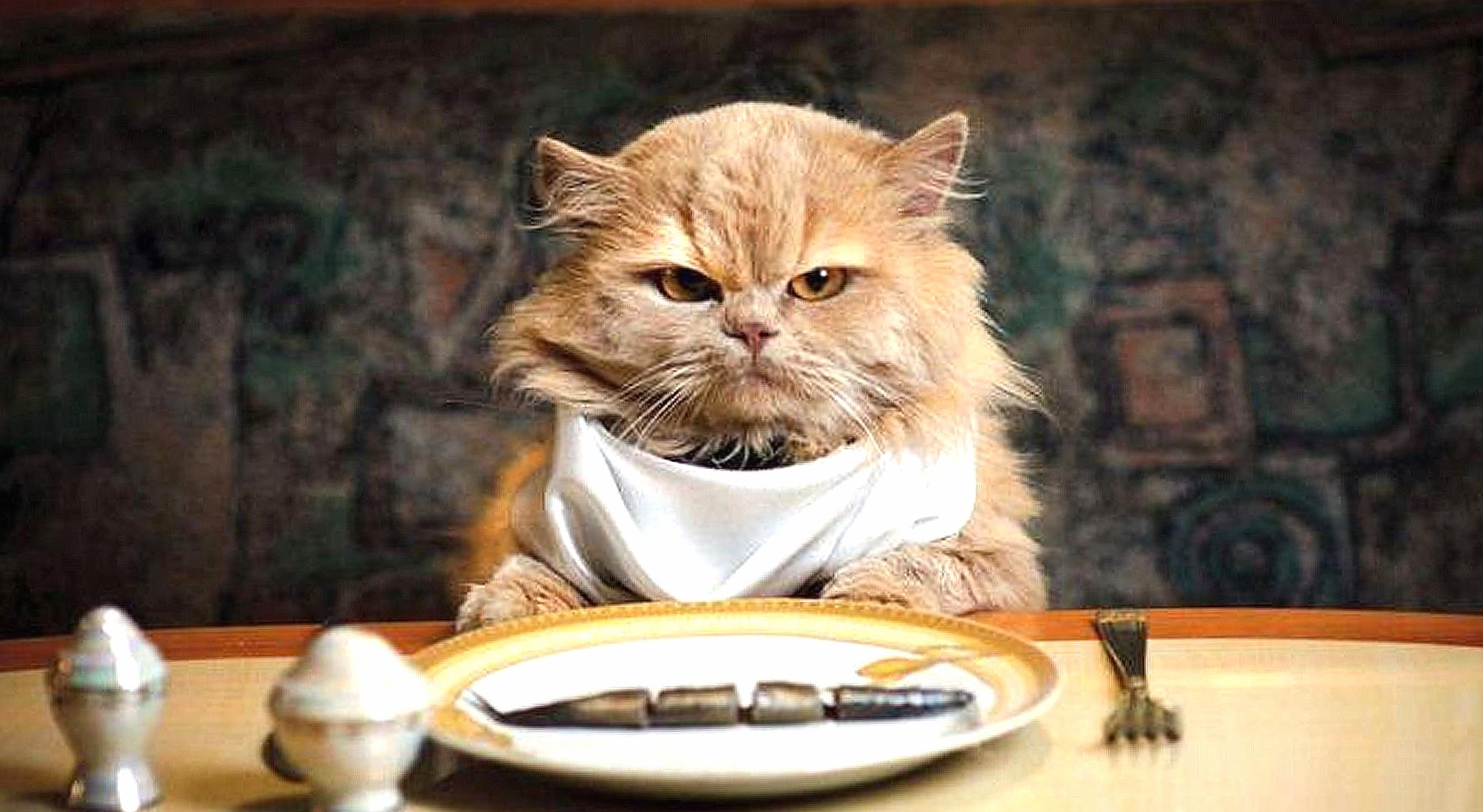 Cat eat fish wallpapers HD quality