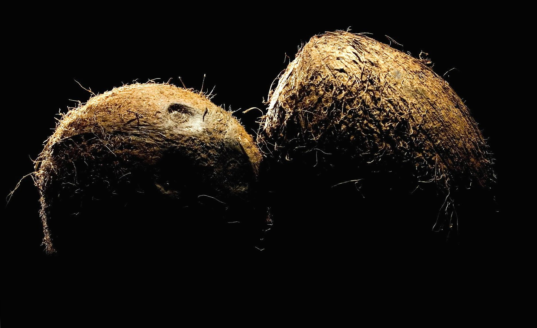 Coconuts wallpapers HD quality