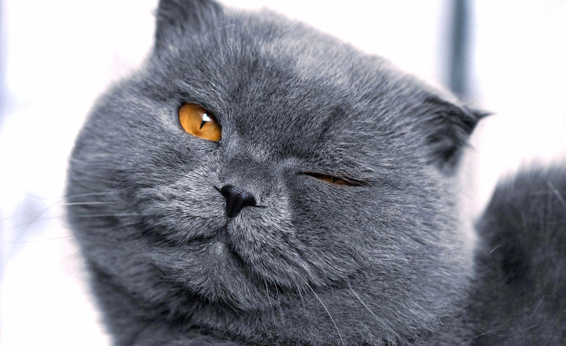 Funny cat wink wallpapers HD quality