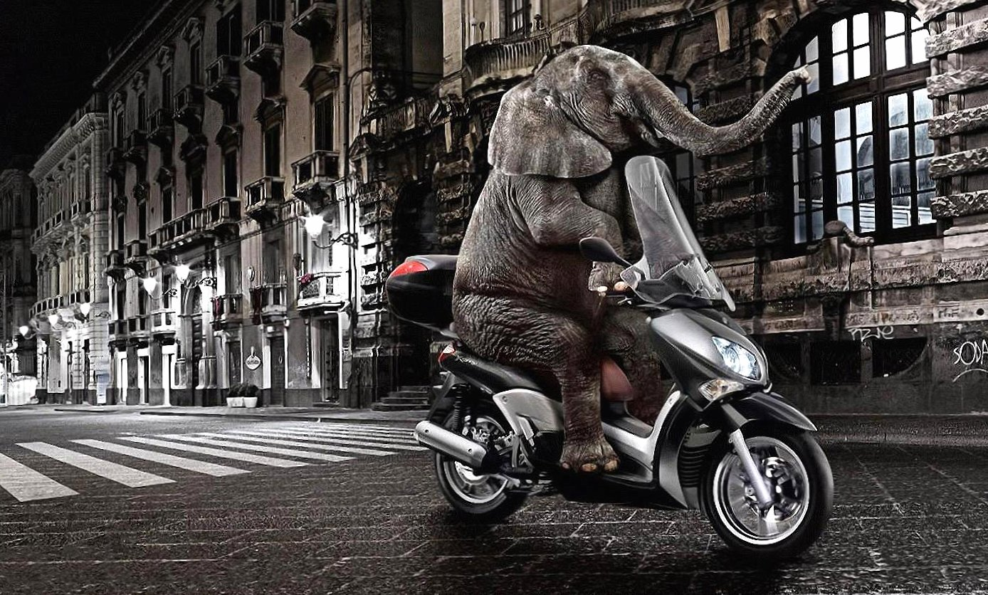 Funny elephant in a motobike wallpapers HD quality