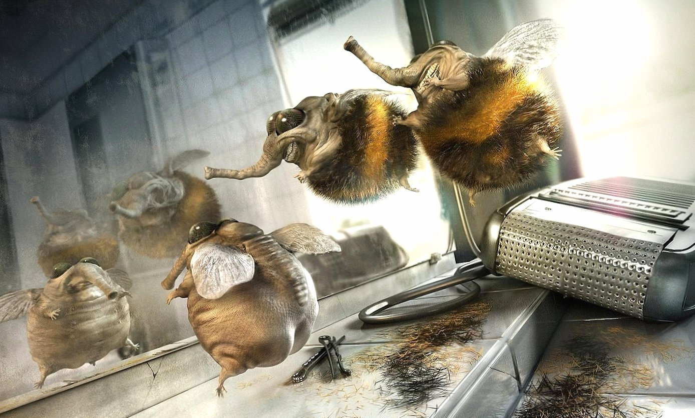 Funny flies depilated wallpapers HD quality