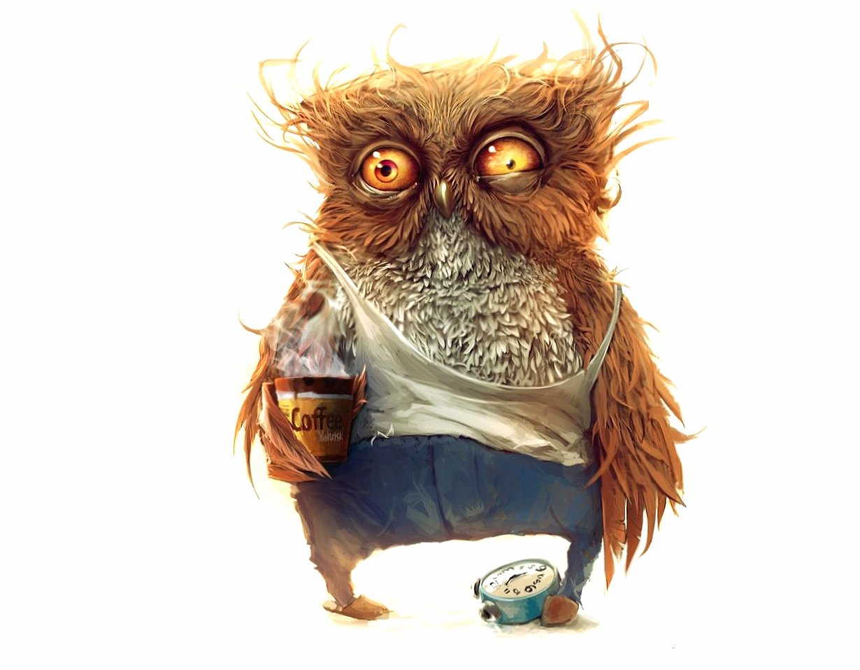 Funny good morning owl wallpapers HD quality