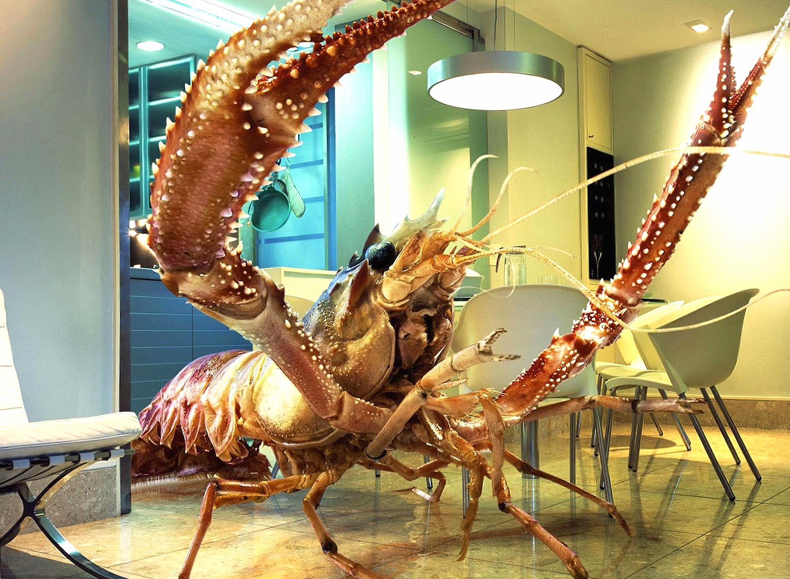 Funny huge lobster at home wallpapers HD quality