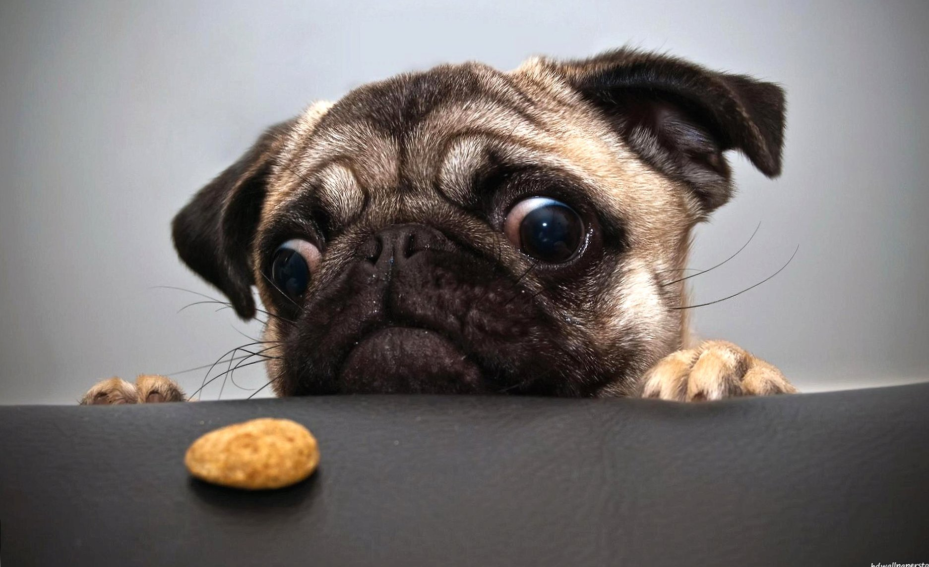 Funny i want a biscuit wallpapers HD quality
