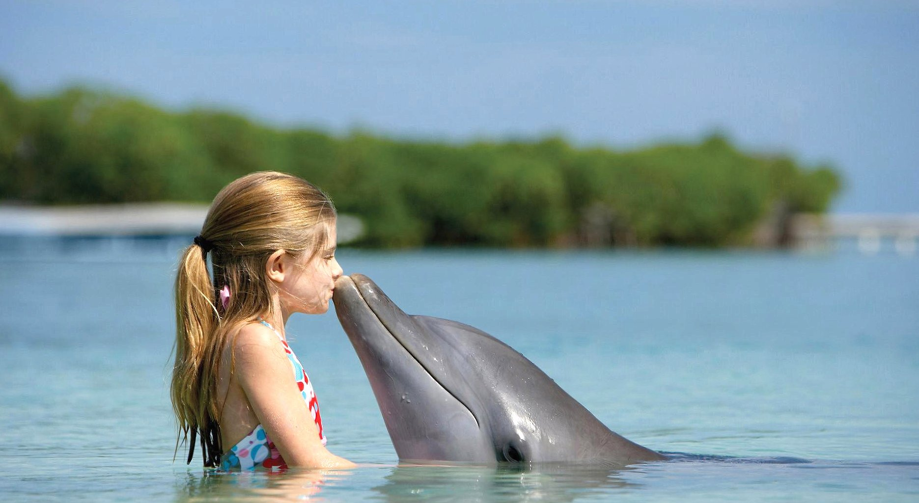 Funny kiss baby dolphin wallpapers HD quality