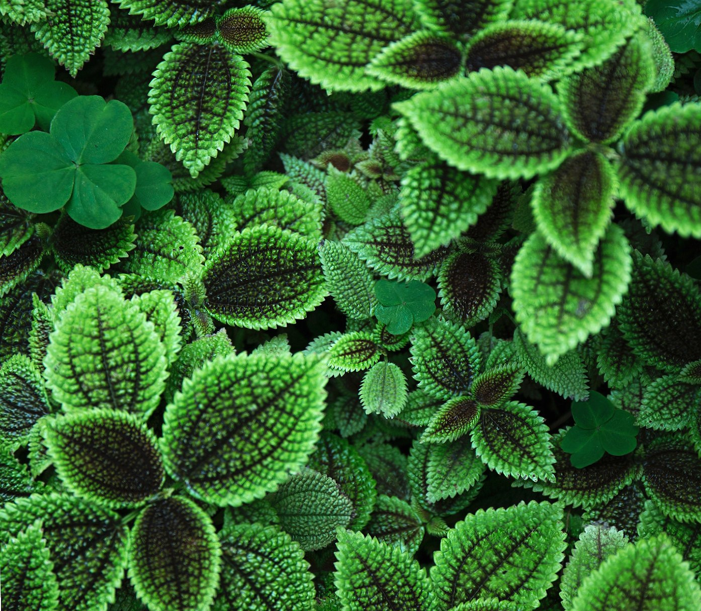 green wallpapers HD quality