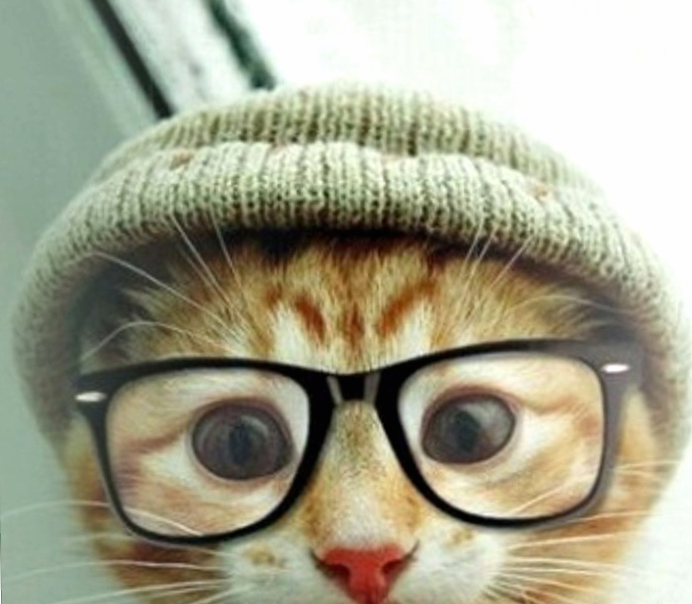 hipster cat at 320 x 480 iPhone size wallpapers HD quality