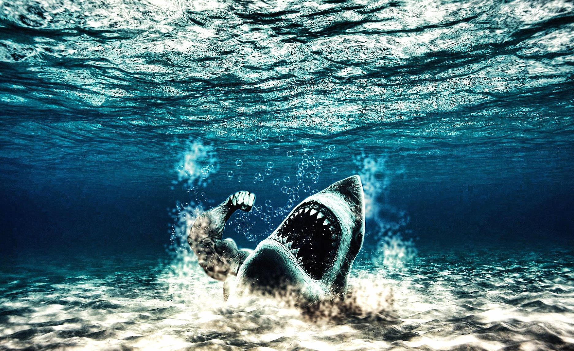 Weird angry shark wallpapers HD quality