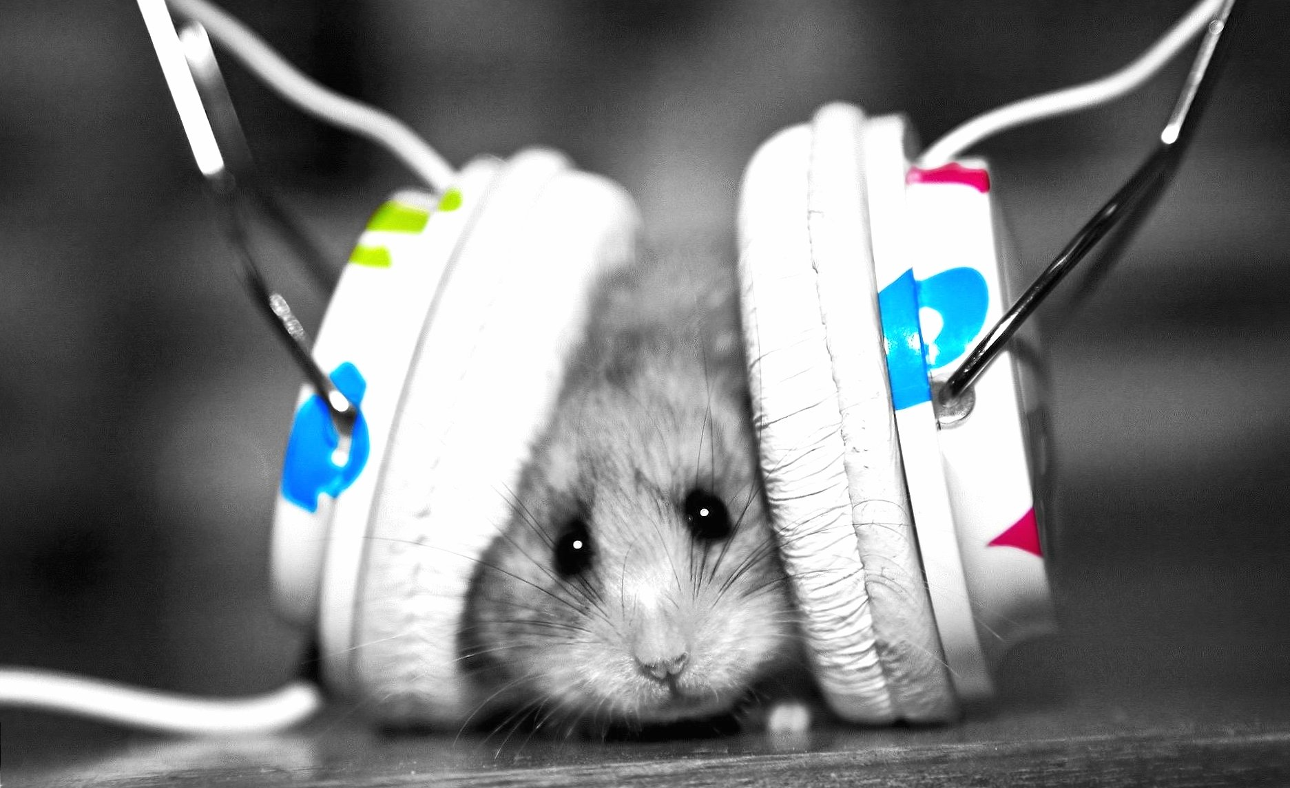 Weird music mouse wallpapers HD quality