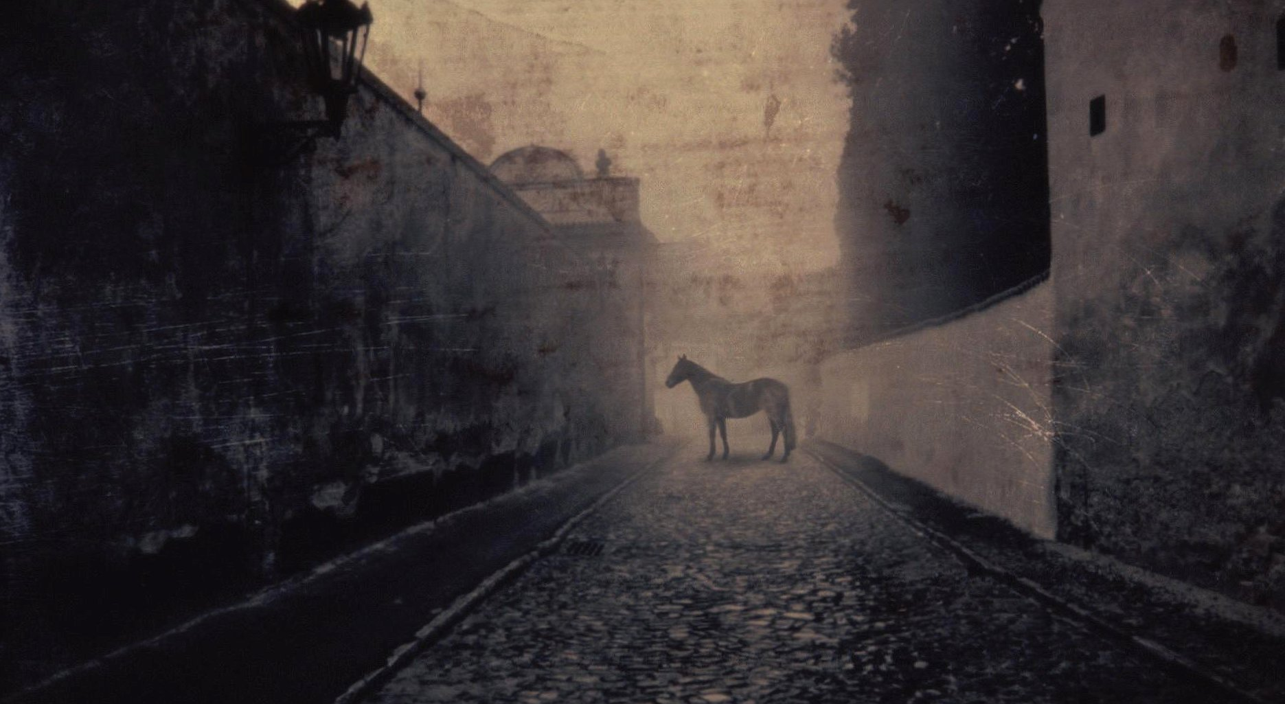 Weird old horse photo wallpapers HD quality