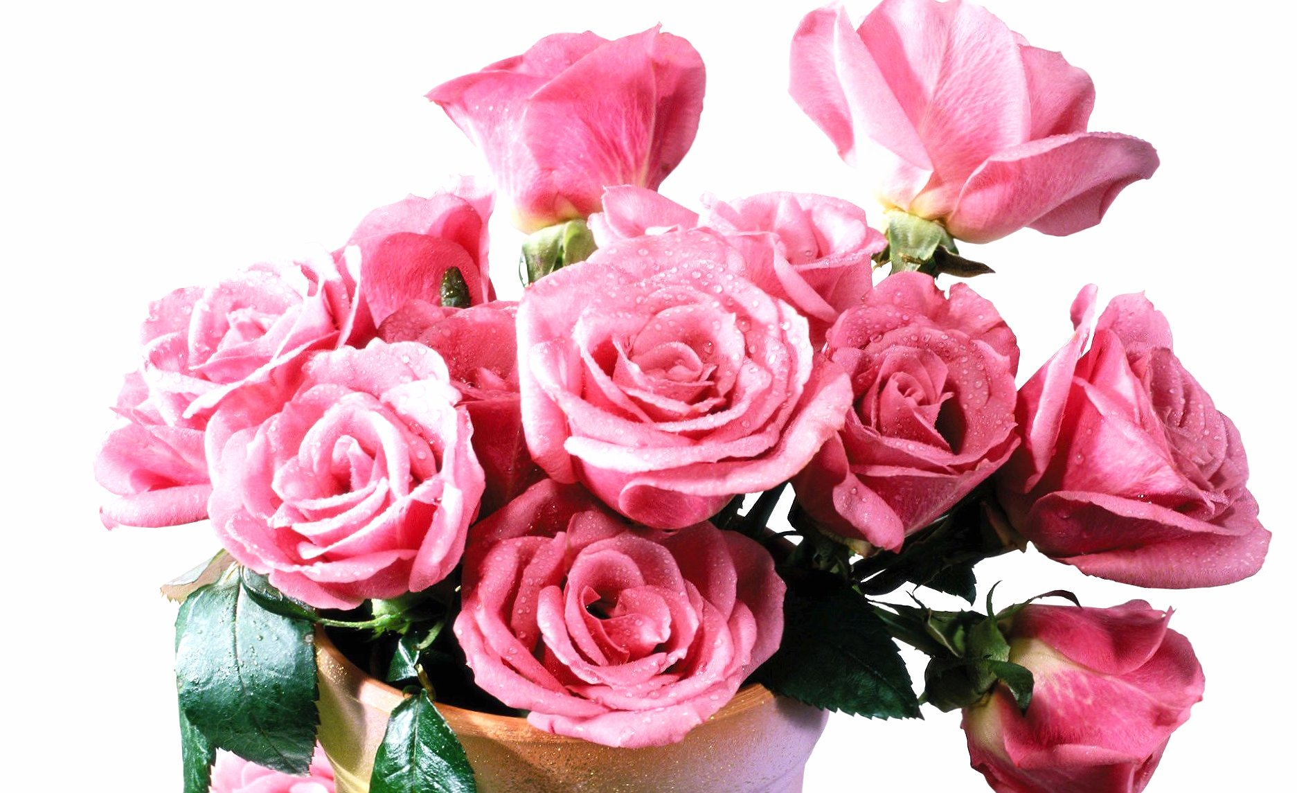 Wet pink roses in the vase wallpapers HD quality