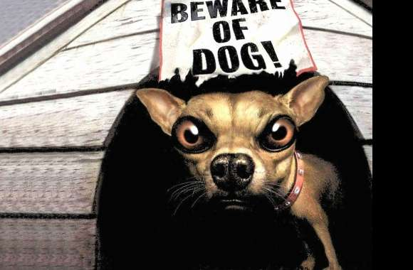 Funny beware of dog wallpapers hd quality