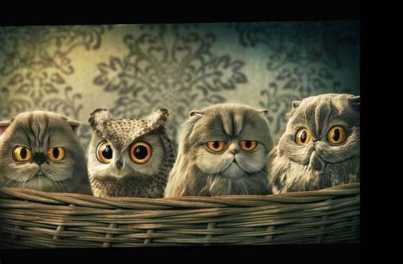 Funny cats or owls wallpapers hd quality