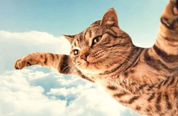 Funny flying cat wallpapers hd quality
