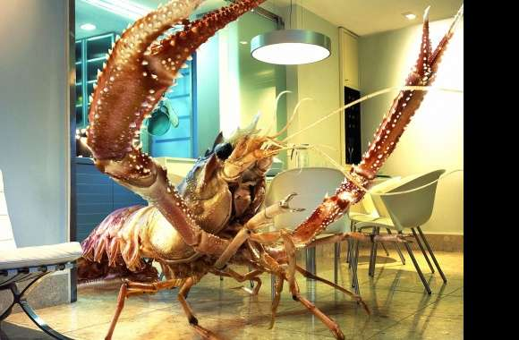 Funny huge lobster at home