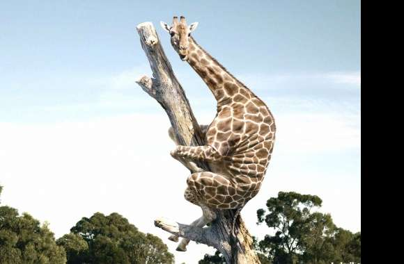 Giraffe fear in tree