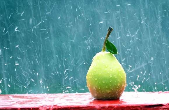 Pear under rain wallpapers hd quality