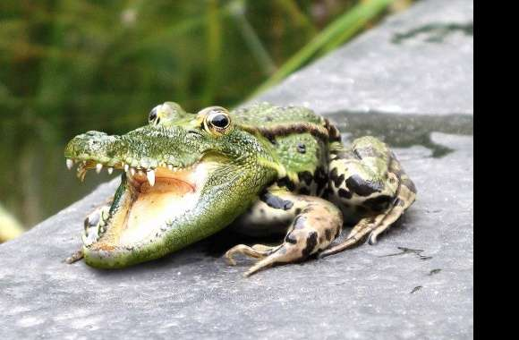 Weird crocodile frog wallpapers hd quality