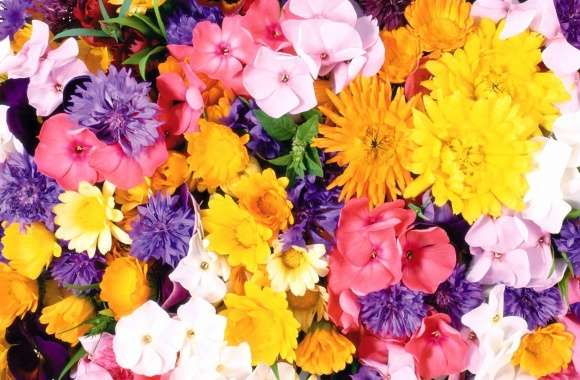 Yellow and pink flowers wallpapers hd quality