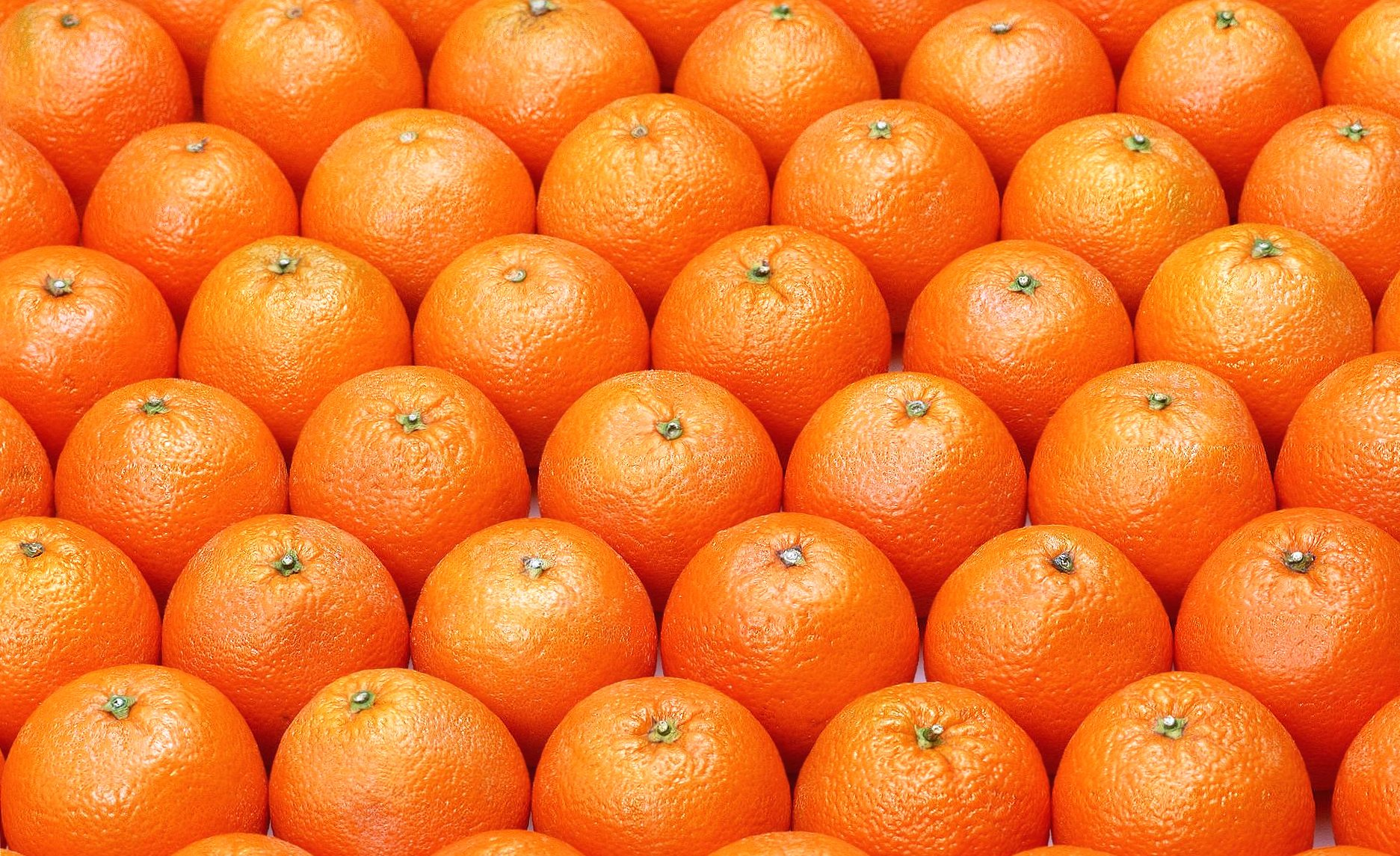 Aligned oranges wallpapers HD quality