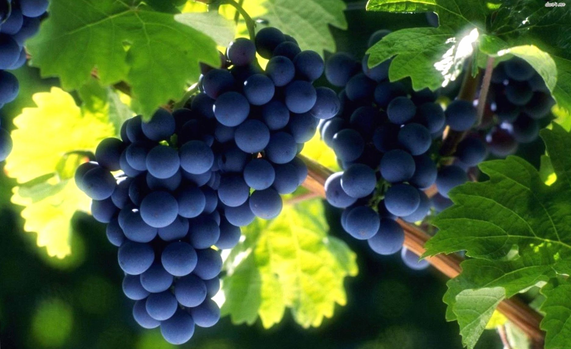 Beautiful grapes wallpapers HD quality