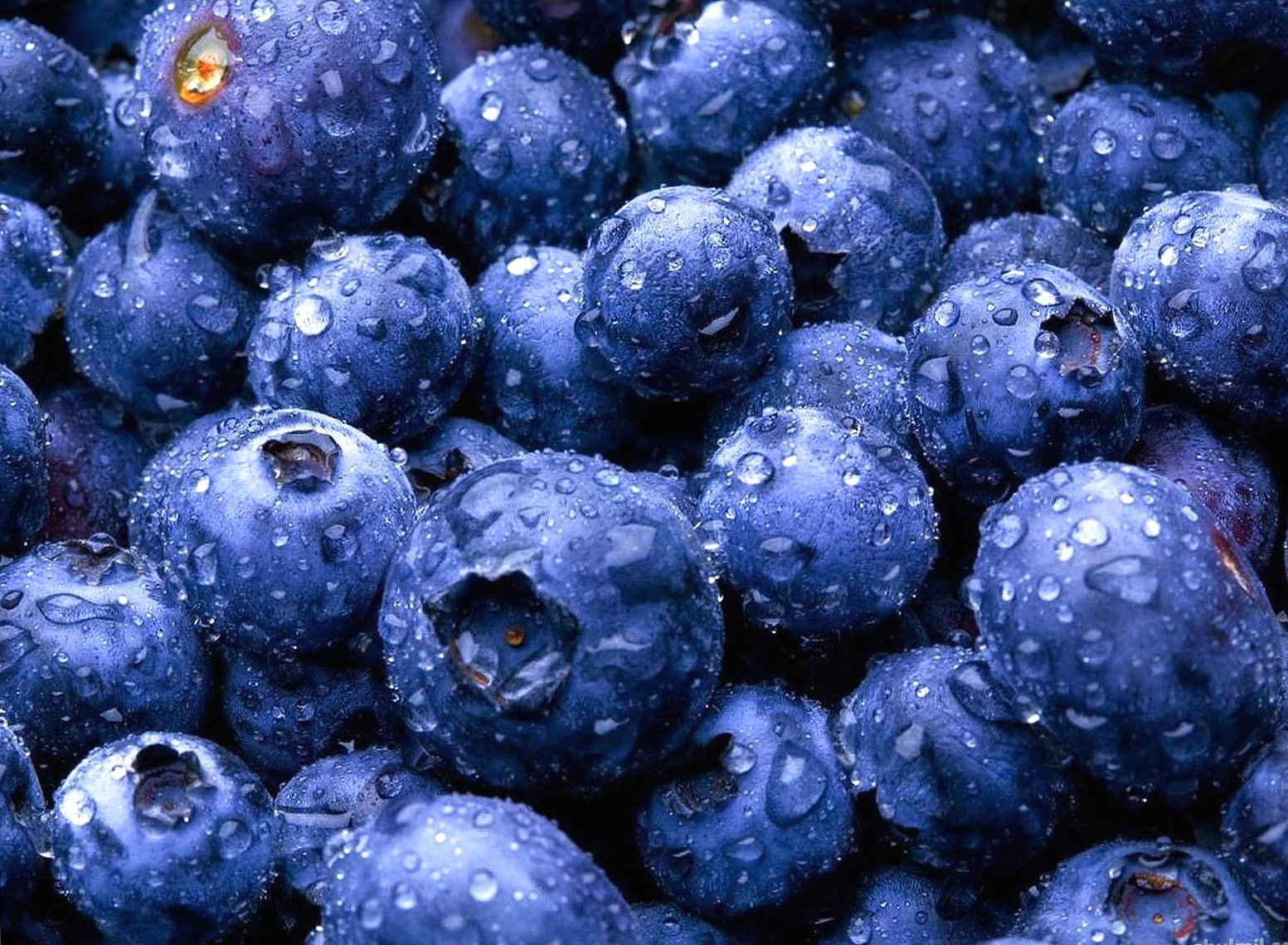 Blueberries wallpapers HD quality